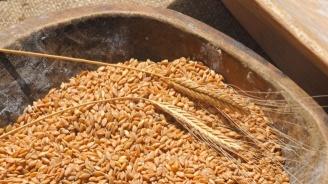 Жътвата в Добричка област завършва с реколта от 648 930 тона зърно