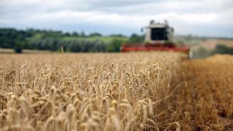 Жътвата във Врачанско завършва с по-ниски добиви заради дъждовното време