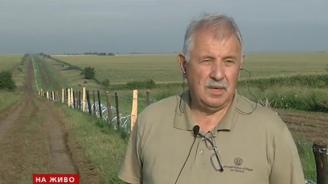 Шефът на Агенцията по горите обясни как вълчата урина ще спира румънските диви прасета