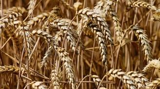 Жегата заплашва да опустоши посевите със зърнени култури в Европа, а пазарните цени растат