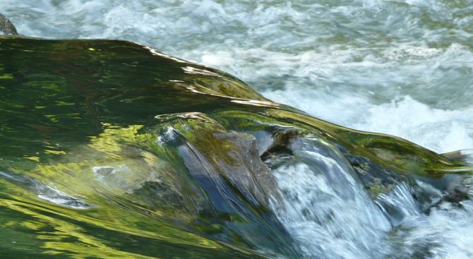 Хиляди риби загинаха в река Рейн в Швейцария заради горещата