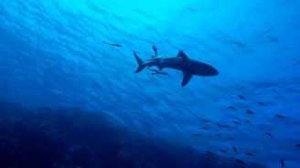 Чешки турист е убит от акула в египетски курорт на Червено море