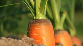93 сертификата на биопроизводители са отнети за година