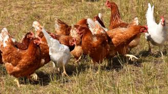 БАБХ отмени забраната за продажба на птици по пазарите