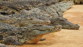 Озверели крокодили прогониха селяни от домовете им