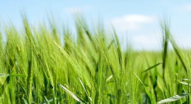 Средната цена на земеделска земя в област Плевен достигна 949