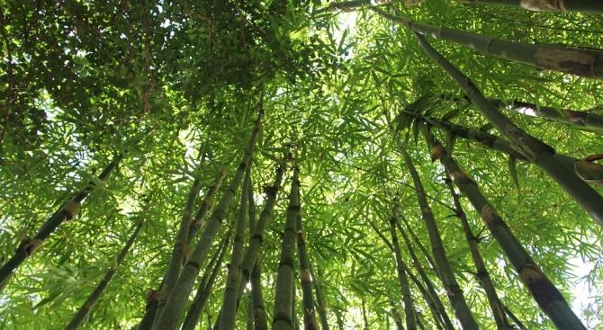 Японче на 2 години оцеля, след като изкара три дни в гората