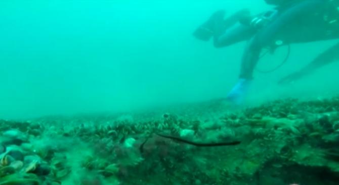 Екипите на две фирми изследват потъналия кораб в залива на
