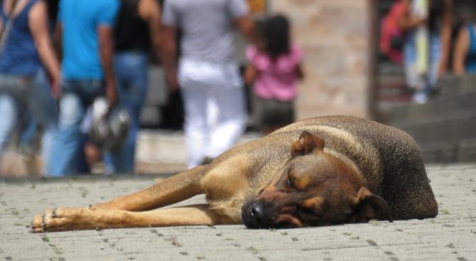 Снимка: Намалява броят на бездомните кучета в София