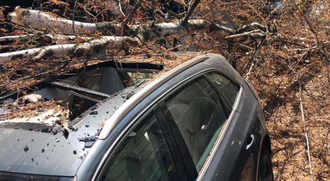Счупен клон на дърво падна върху лек автомобил на ул.