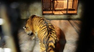 Община Пловдив ще поднови строителните дейности по зоологическата градина