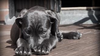 Куче спаси семейство от наводненията в Индия