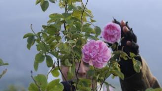 """ДФ """"Земеделие"""" е изплатил почти 2 млн. лева на розопроизводители"""