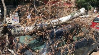 Дърво падна и потроши две коли в центъра на София (снимки)