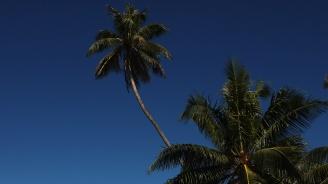 Премиерът на островите Тонга призова лидерите от региона масово да отслабнат
