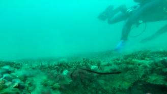 100 тона мазут има в потъналия преди век кораб край Созопол (снимки)