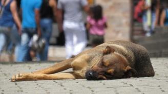 Намалява броят на бездомните кучета в София