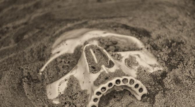 Фосилизирана останка от дете доказва съвокуплението между два човешки вида,