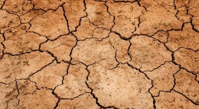 Вижте какво ще се случи с реколтата заради рекордните жеги в Европа тази година