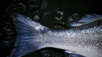 """Над 300 килограма риба е извадена от бракониерски мрежи на язовир """"Ястребино"""""""