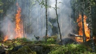 Видеозапис разкри причината за горските пожари в Гърция?