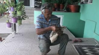 Спасителят на щъркели осинови обгорена птица (снимки)