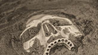 Фосил от момиче доказва кръстоската между неандерталец и Денисов човек