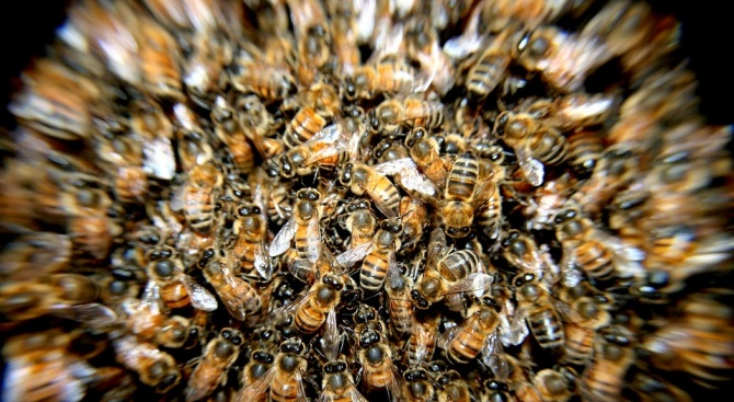 Рояк от 20 000 пчели накацаха върху чадър на будка