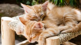 В Нова Зеландия забраняват домашните котки