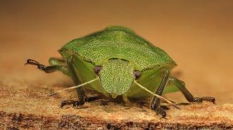 Вредните насекоми ще унищожават повече посеви заради глобалното затопляне