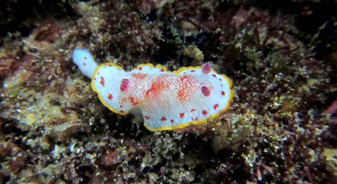 Три вида странни риби живеят в една от най-дълбоките падини на Тихия океан