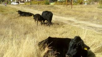 Спасиха стадо животни от воден капан