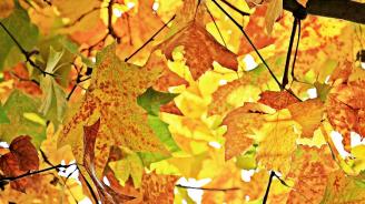 Астрономическата есен настъпва утре в 4.54 часа