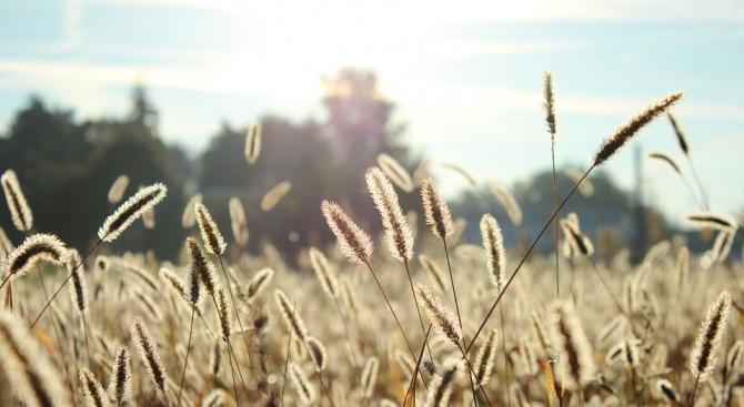 Най-масова е тревната алергия и наистина тя е края на