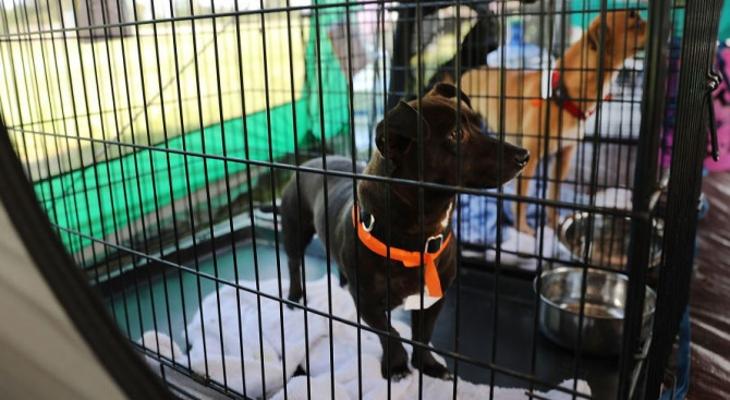 """Арестуваха жена, спасявала животни по време на урагана """"Флорънс"""" (видео)"""