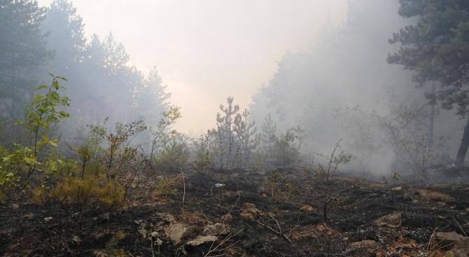 Локализиран е пожарът, избухнал снощи над благоевградското село Дренково, съобщи