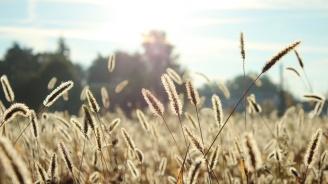 Какви алергии се отключват с началото на есента