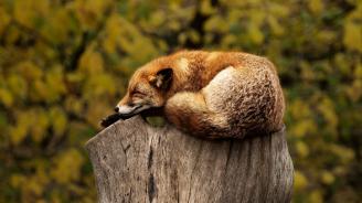 Спането по корем е най-вредно