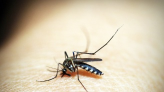 Унищожиха маларийни комари с помощта на генно инженерство