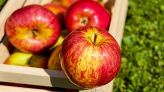 Над 100 сорта ябълки представя Институтът по земеделие в Кюстендил