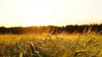 Прибраха около 70% от фуражното зърно в Добричкия регион