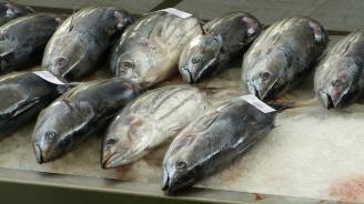 162-килограмова риба тон бе продадена за 37 000 долара