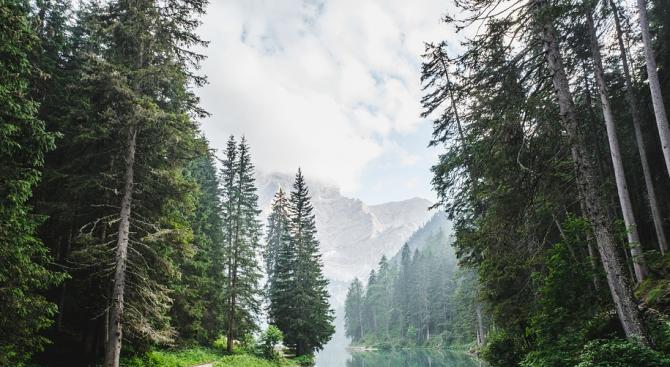 Европейските гори няма да забавят затоплянето на климата