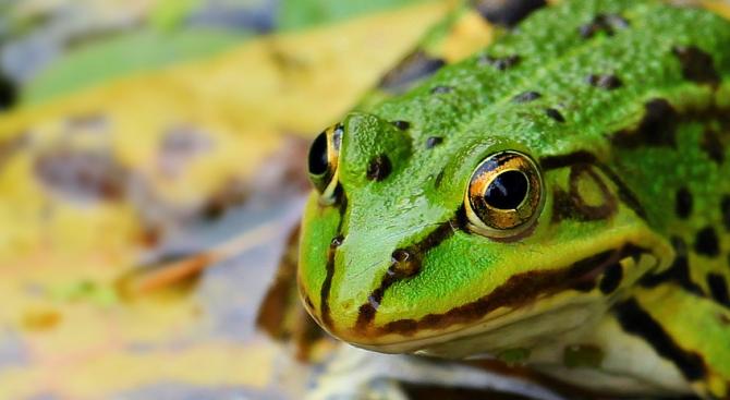 Откриха жаба в опакована салата в Гърция