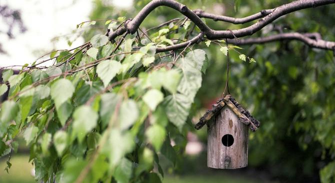 Столична община и Българското дружество за защита на птиците канят
