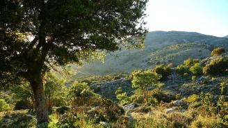 Обвиняват трима непълнолетни българи за горски пожар на остров Крит