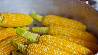 Прибрана е реколтата от царевица в община Перник