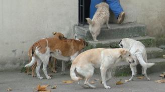 Отровиха 7 бездомни кучета и котки във Враца