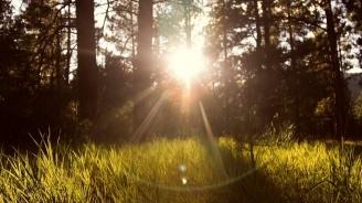 Новата седмица идва със слънце