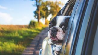 Повече от 650 са новорегистрираните домашни кучета в Пловдив